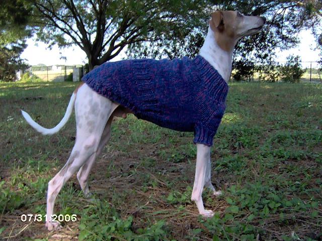 Free Custom Italian Greyhound Sweater Knitting Pattern Screamin Cutie